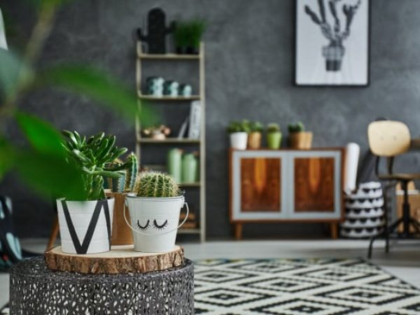 Grey room with cactus in decorative pot
